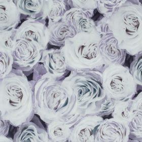rose03_570x480